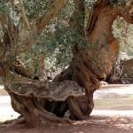 In Puglia, dove la bella gente cresce sugli alberi
