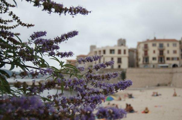 viaggio in provenza_antibes