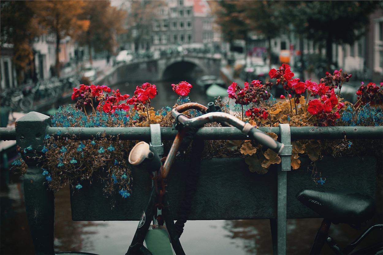 Come affittare una bici in Olanda e che cosa fare