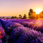 <strong>Provence by car: 4 amazing routes </strong>