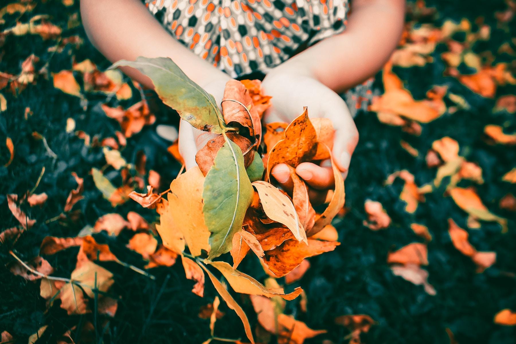 foliage_viaggio autunno