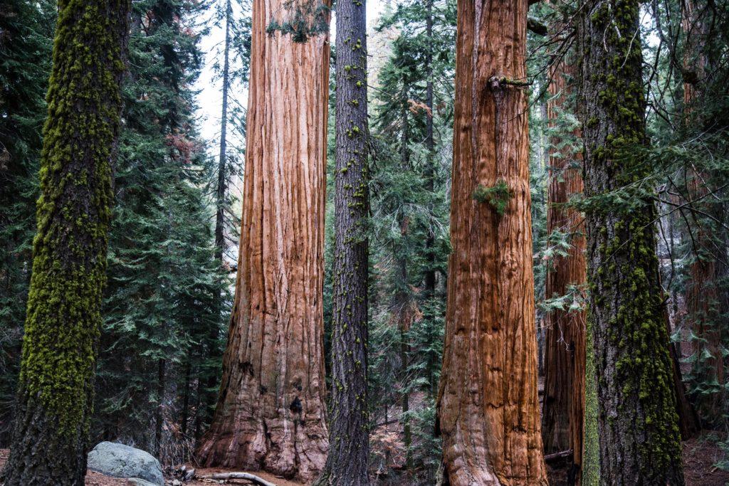 Sequoia National Park, ph. Josh Carter, Unsplash