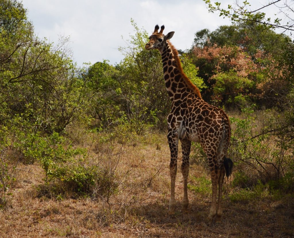 savana a valenzia_zoo_bioparco_christelle-hayek