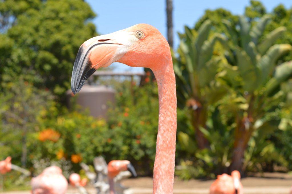 zoo_valencia_oe-ridley-beth-martin
