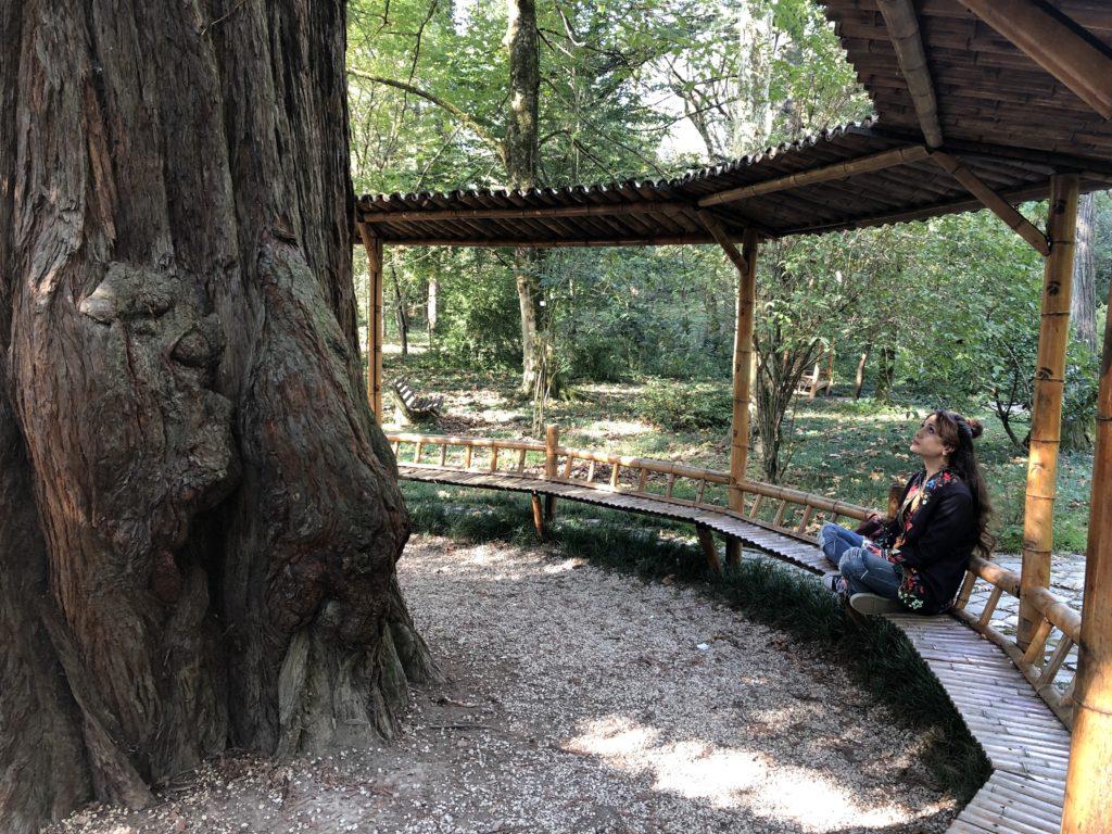 Kutaisi_botanic Garden