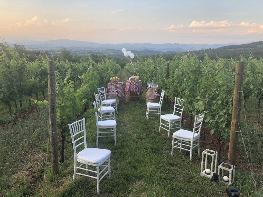 Filari della Cantine Castelvecchio aperitivo al tramonto