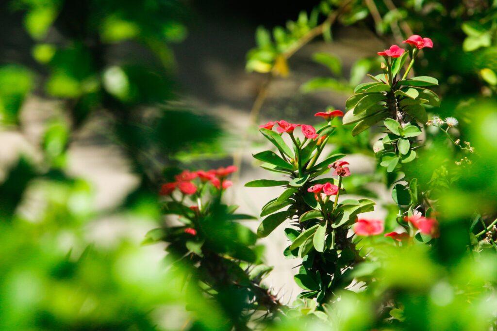 la cutura lecce giardini da vedere in italia